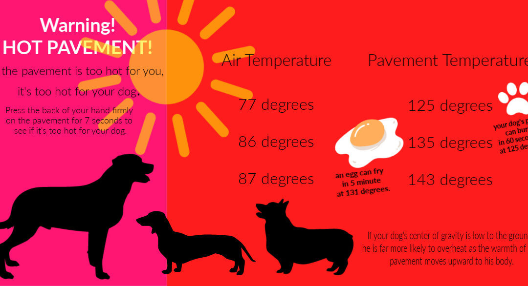 Protect your dogs paws in the summer