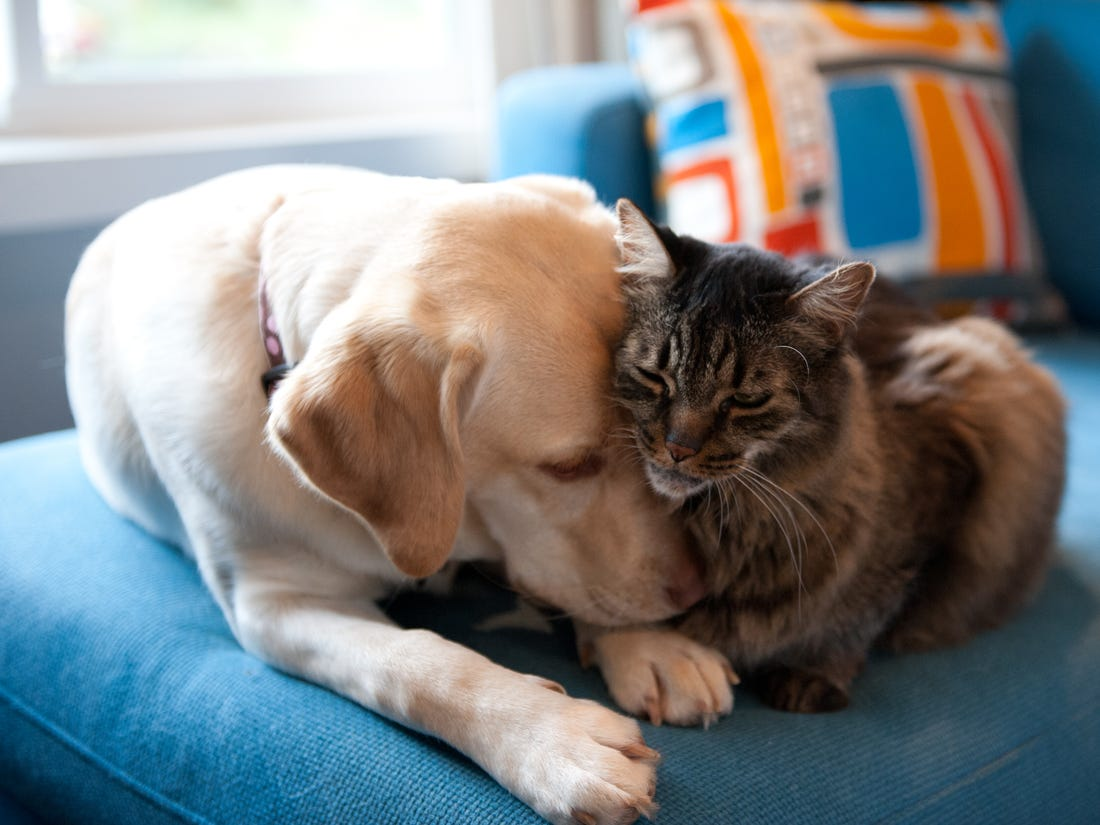Household Pets and Covid-19
