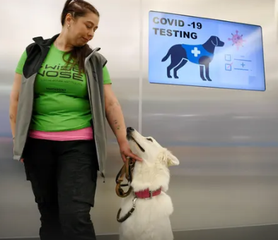 Helsinki Airport Uses Sniffer Dogs to Detect Covid