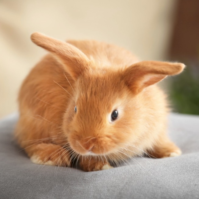 What Do Rabbits Have To Do With Easter?