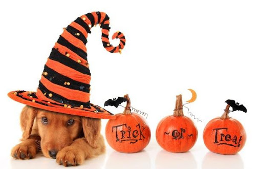 HAVE FUN AND BE SAFE WITH YOUR PETS FOR HALLOWEEN
